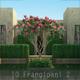 10 Frangipani Tree 2