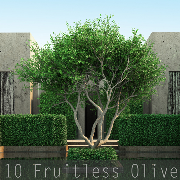 3DOcean 10 Fruitless Olive 19487340