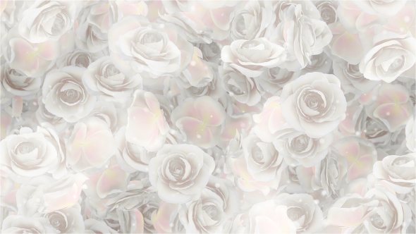 Roses White Wedding Background By Minimultik Videohive