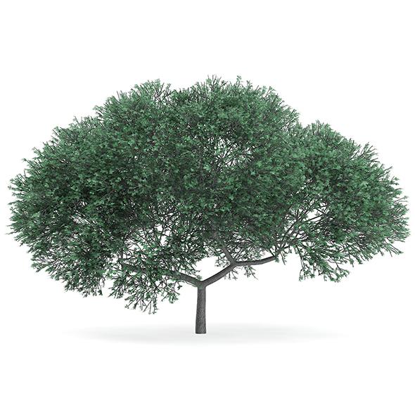 English Oak (Quercus robur) 10.2m - 3DOcean Item for Sale
