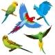 Cartoon Parrots, Tropical Birds Vector Set