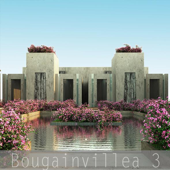 3DOcean Bougainvillea 3 19494784
