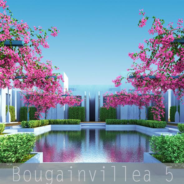 Bougainvillea 5 - 3DOcean Item for Sale