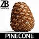 Pinecone 001