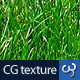 Grass Texture II - 3DOcean Item for Sale
