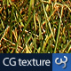 Grass Texture III - 3DOcean Item for Sale