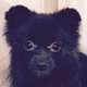 Little_Funny_Dog