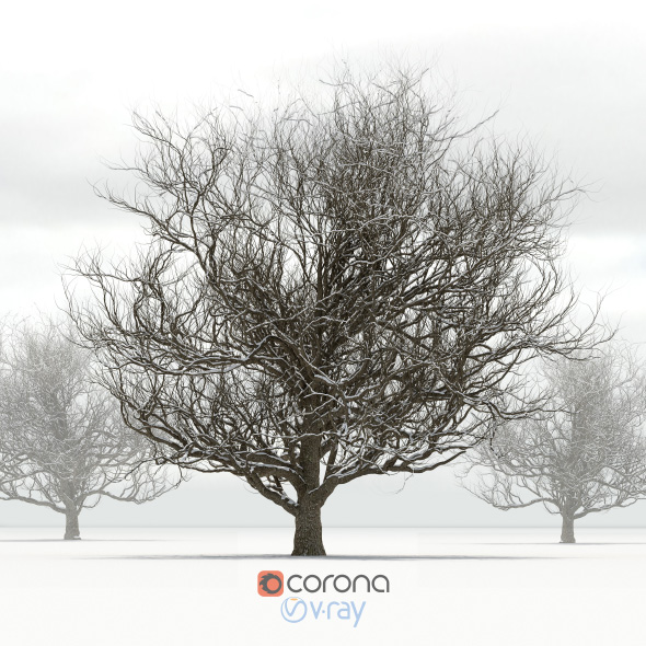 Oak tree with snow - 3DOcean Item for Sale