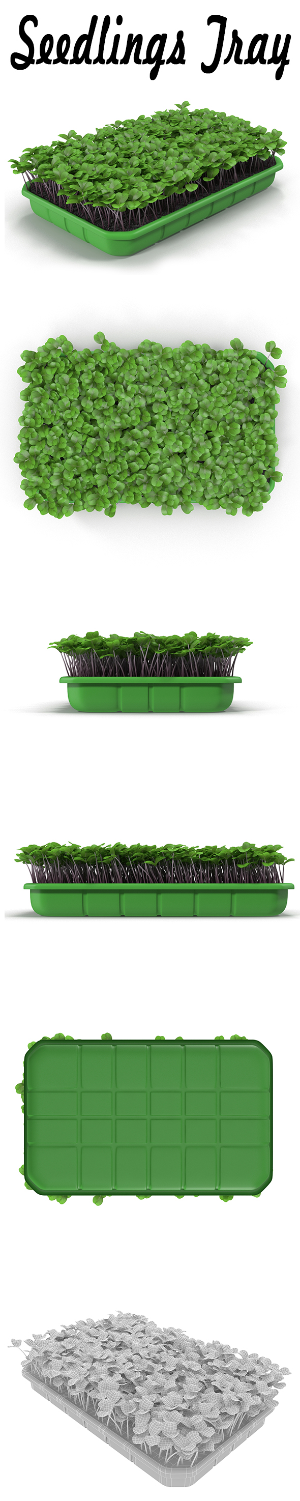 Seedlings Tray # 2 - 3DOcean Item for Sale