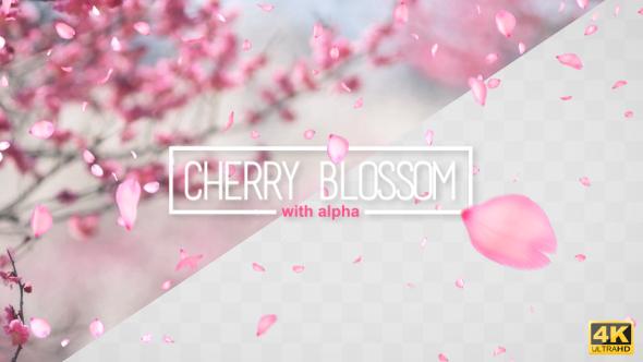 VideoHive Cherry Blossom Falling 19532705