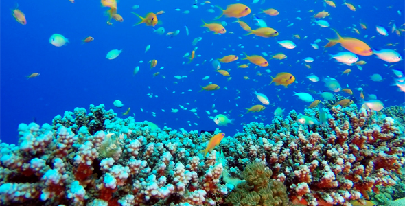 VideoHive Tropical Colorful Fishes 19052740