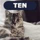 TEN - Photoshop Actions 3