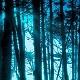 AmbientForest