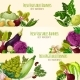 Vegetables and Fresh Veggies Vector Banners Set