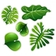 Sticker Set of Green Leaves