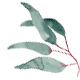 Elegant Watercolor Eucalyptus Leaves clip art hand made