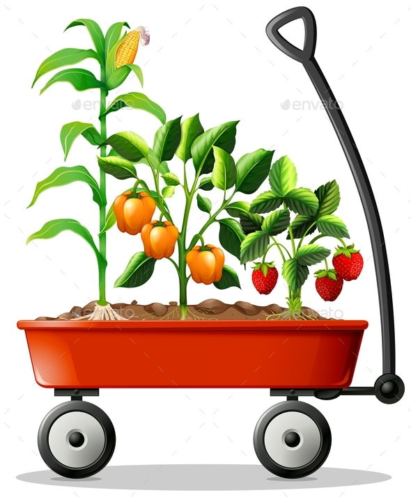 Fresh Vegetables and Fruits in the Cart