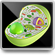 3D Model of Plant Cell