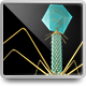 3d Model of Virus T4 Structure