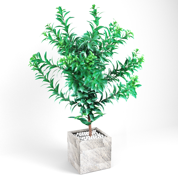 Plant tree 03 - 3DOcean Item for Sale
