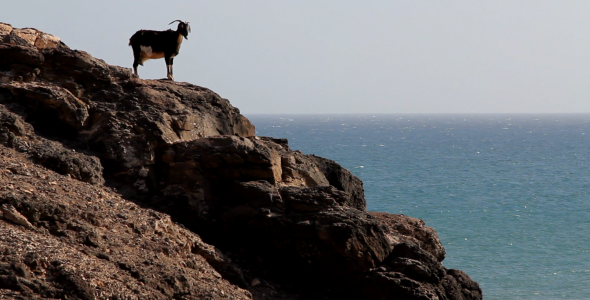 Goat On A Cliff 2-Pack