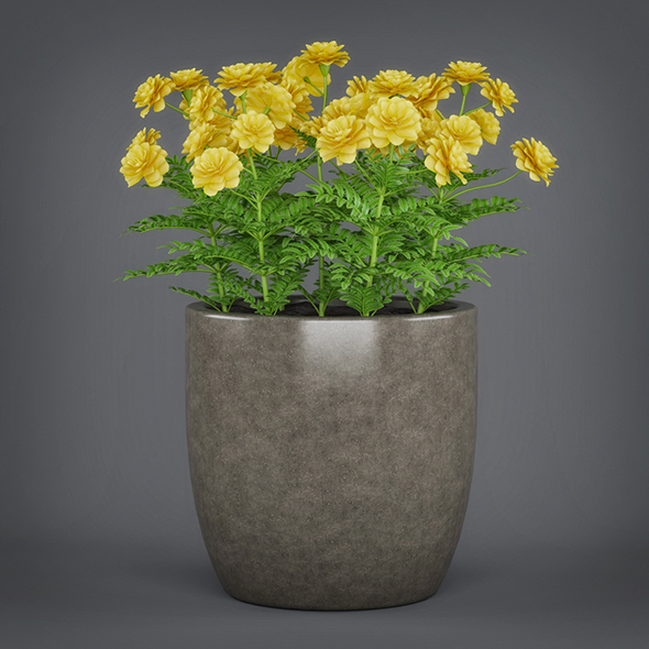 Potted Flower Plant - 3DOcean Item for Sale
