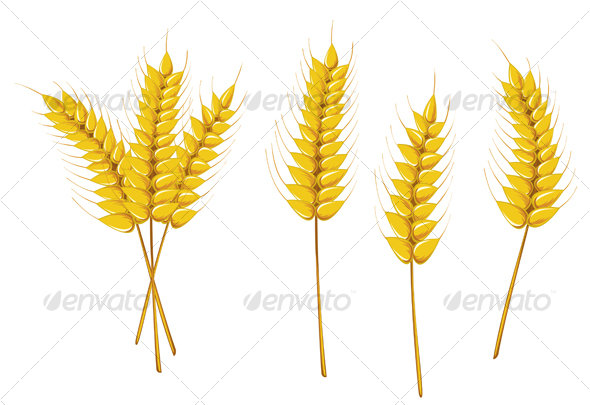 GraphicRiver Ripe wheat 74347