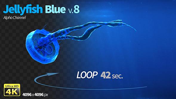 VideoHive Jellyfish Blue 8 19617044