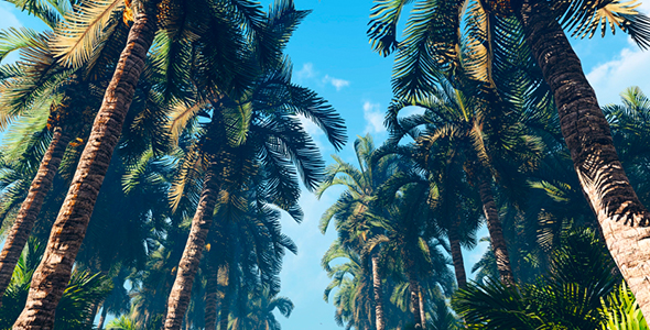 VideoHive Palm Tree Forest 19622579