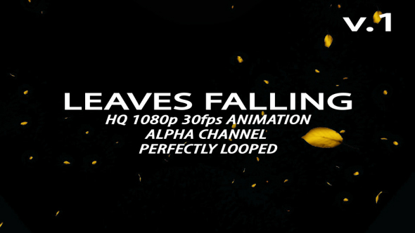 VideoHive Leaves Falling 19629029