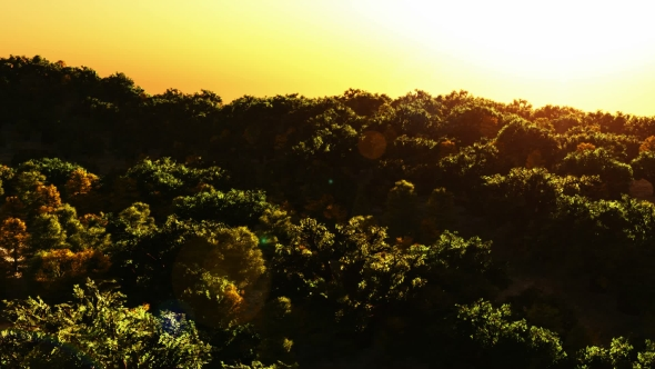 VideoHive Tropical Palm Forest at Sunset 19637667