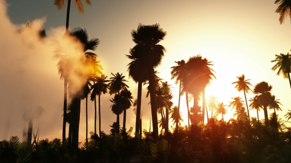 VideoHive Palms in Desert at Sunset 19637958