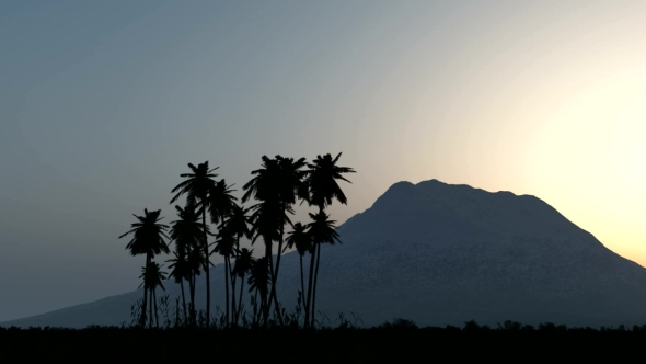 VideoHive Palms in Desert at Sunset 19638000