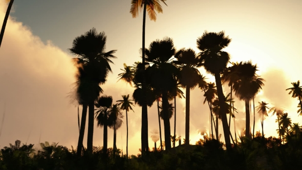 VideoHive Palms in Desert at Sunset 19638074