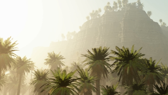 VideoHive Palms in Desert at Sunset 19638113