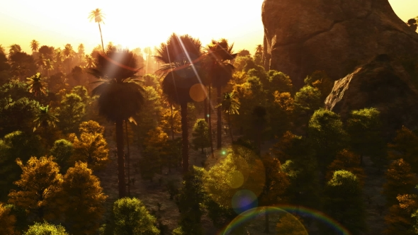 VideoHive Tropical Palm Forest at Sunset 19638169