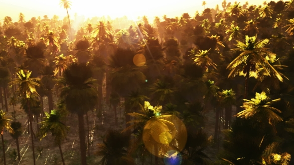 VideoHive Tropical Palm Forest at Sunset 19638240