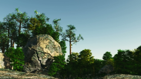 VideoHive Pine Forest on Granite Rock 19638349