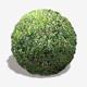 Dense Forest Floor Seamless Texture