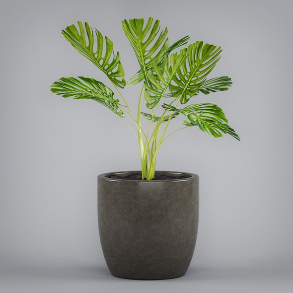 Monstera Potted Plant - 3DOcean Item for Sale