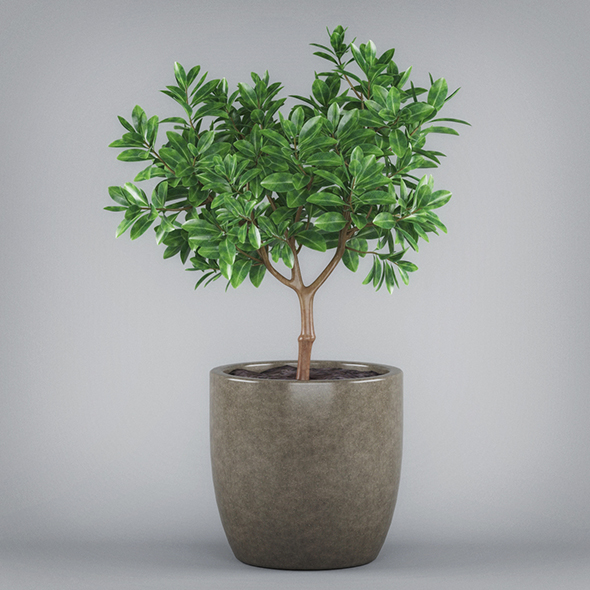 3DOcean Potted Bonsai Tree 19674375
