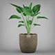 Potted Tropical Plant