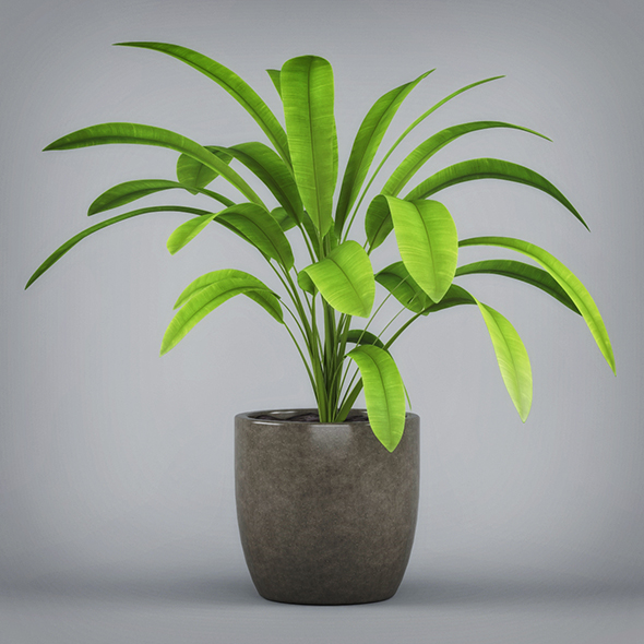 3DOcean Potted Banana Plant 19674494