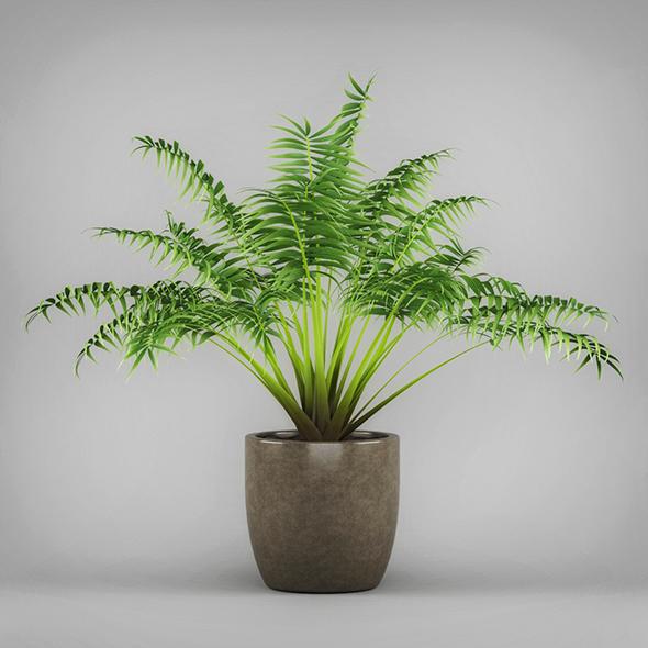 3DOcean Potted Kentia Palm Plant 19674569