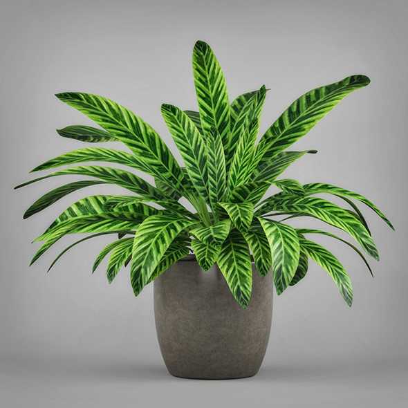 3DOcean Potted Peace Lily Plant 19674686