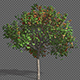 Growing Seasons Tree