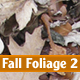 Fall Foliage 2 - GraphicRiver Item for Sale