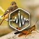 Crickets and Birds Loop