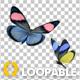 Butterfly Pair - Rainbow Batesia