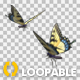 Butterfly Pair - Tiger Swallowtail